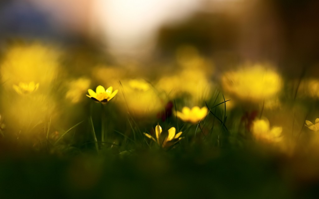ws_Yellow_Flowers_Macro_Photography_1920x1200