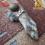 Кроличья лапка талисман купить
