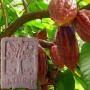 Натуральное-мыло-какао