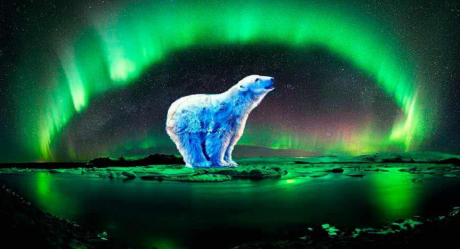 шаманский бубен медведь эвенки