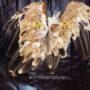 крылья орлов