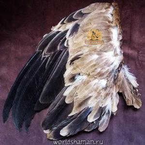 крылья орла купить