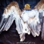 размах крыльев орла