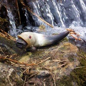 шаманская шумелка рыба бубенчик