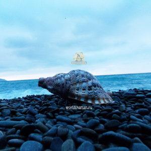зов моря горн