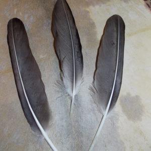 Перья орла купить