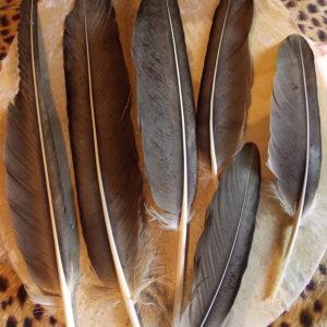 Перья орла бородача купить