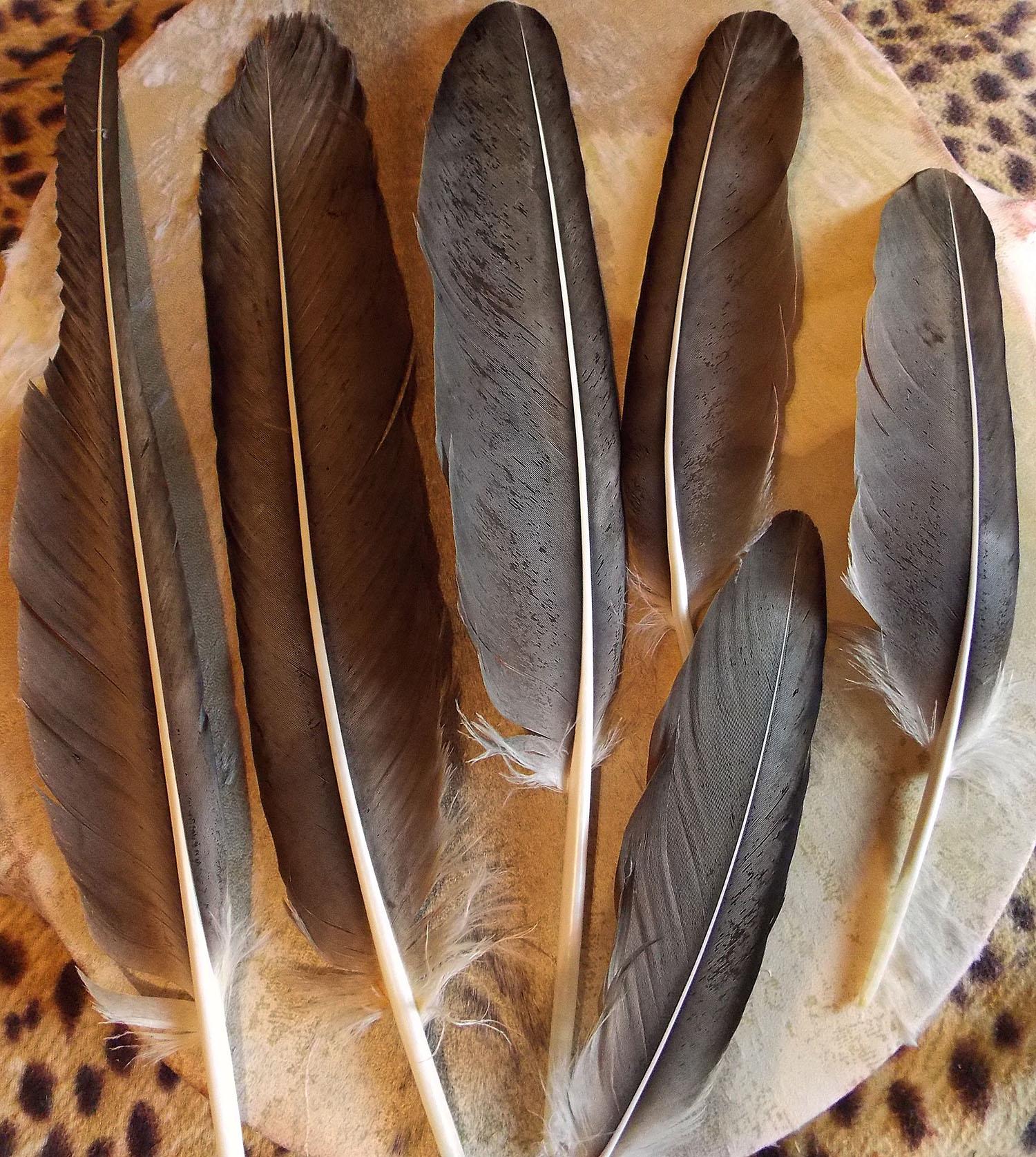 эти перья орла картинки душу